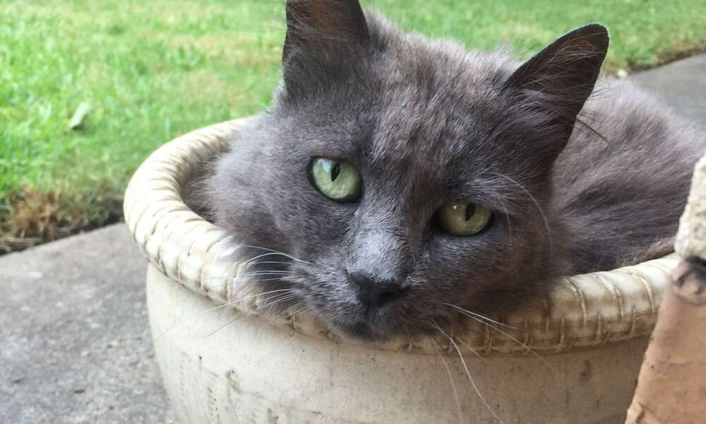 Council will discuss the potential introduction of a Cats By-Law at its meeting on Tuesday 20 February, particularly the enforcement and resource implications surrounding its implementation.